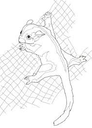 Cute Sugar Glider Coloring Pages For Kids
