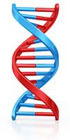Genetica of erfelijkheidsleer van honden