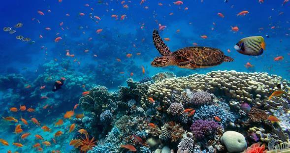 como cuidar los oceanos