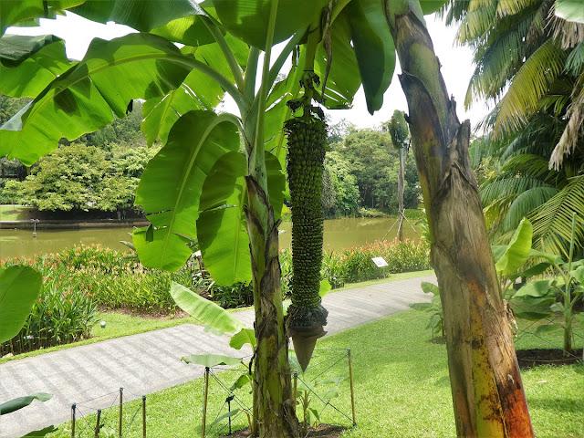 Botaniska trädgården i Singapore