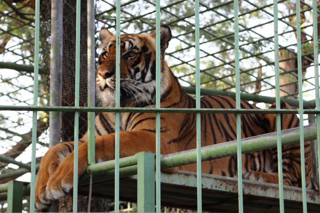 My Yellow Bells Food Travel And Style Blogger In Dubai Dubai Zoo