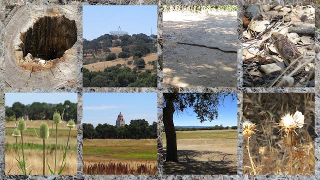 Stanford University - Lake Lagunita
