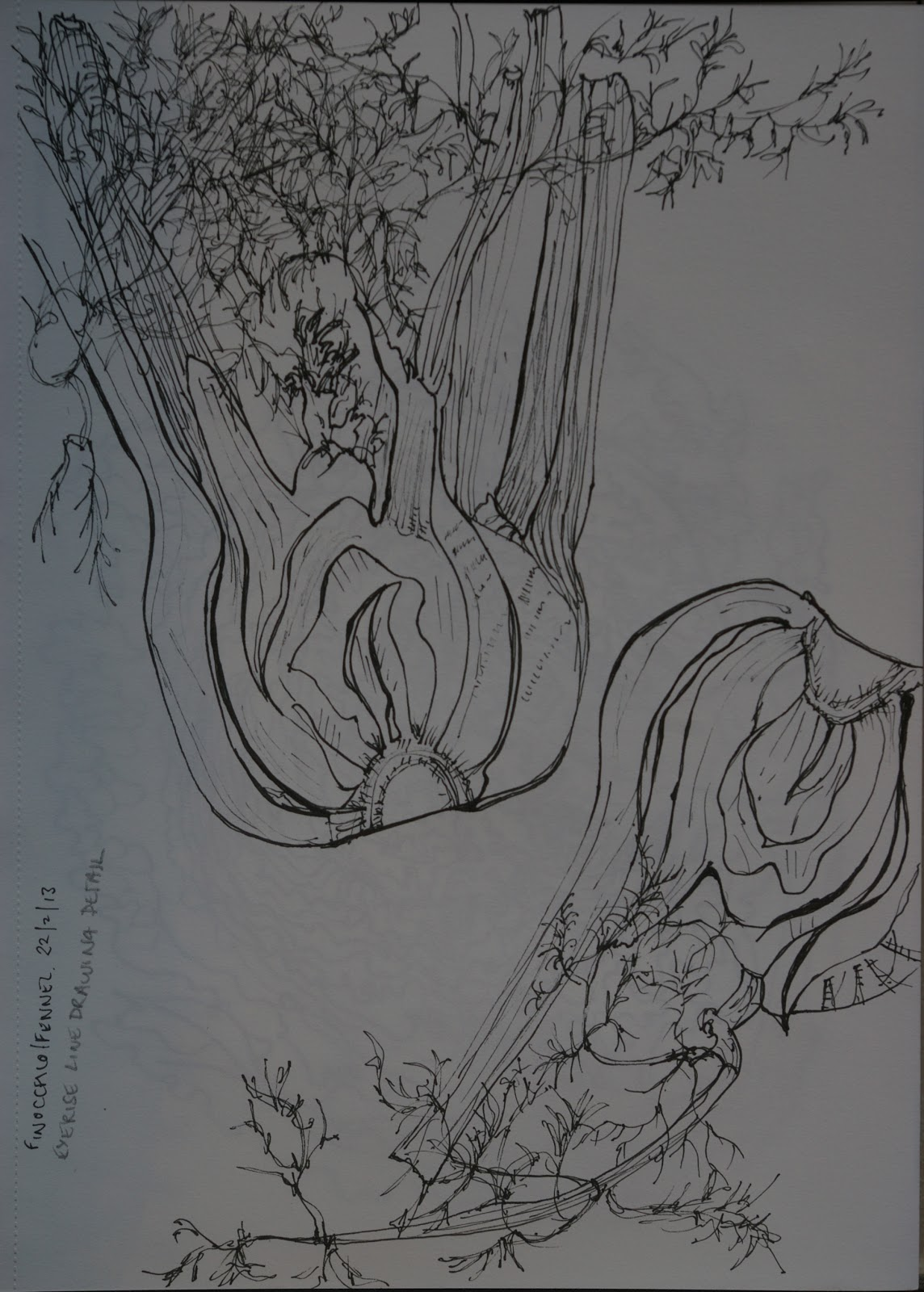 Aylish S Oca Learning Log Project Detailed Observation Exercise Line Drawing Detail