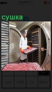 В помещении мужчина рабочий осуществляет сушку ягод на подносах