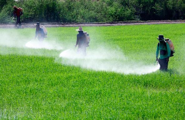 el problema ambiental de los plaguicidas