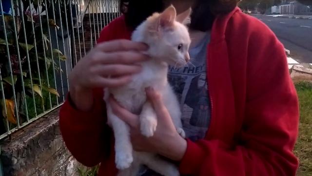 eu afagando um gatinho que acabou sendo doado alguns dias depois