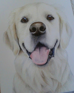 Golden retriever pet portrait oil on canvas
