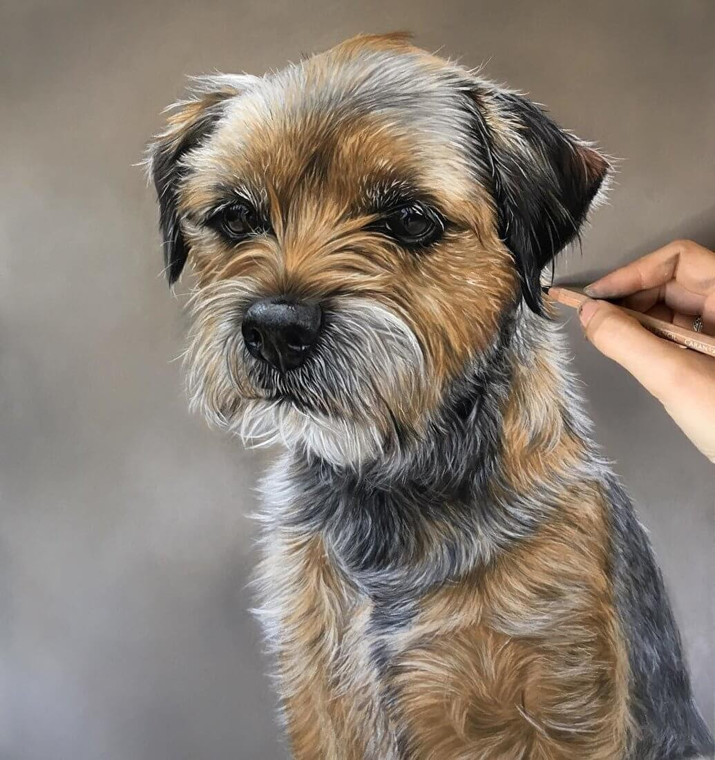 07-Border-Terrier-Danielle-Fisher-Dog-Portraits-with-Pastel-Drawings-www-designstack-co