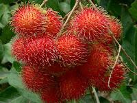 gambar buah rambutan
