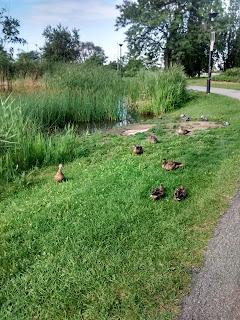 parc Jarry l'été canards