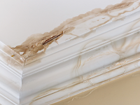 Preventing Mold Due To Water Damage