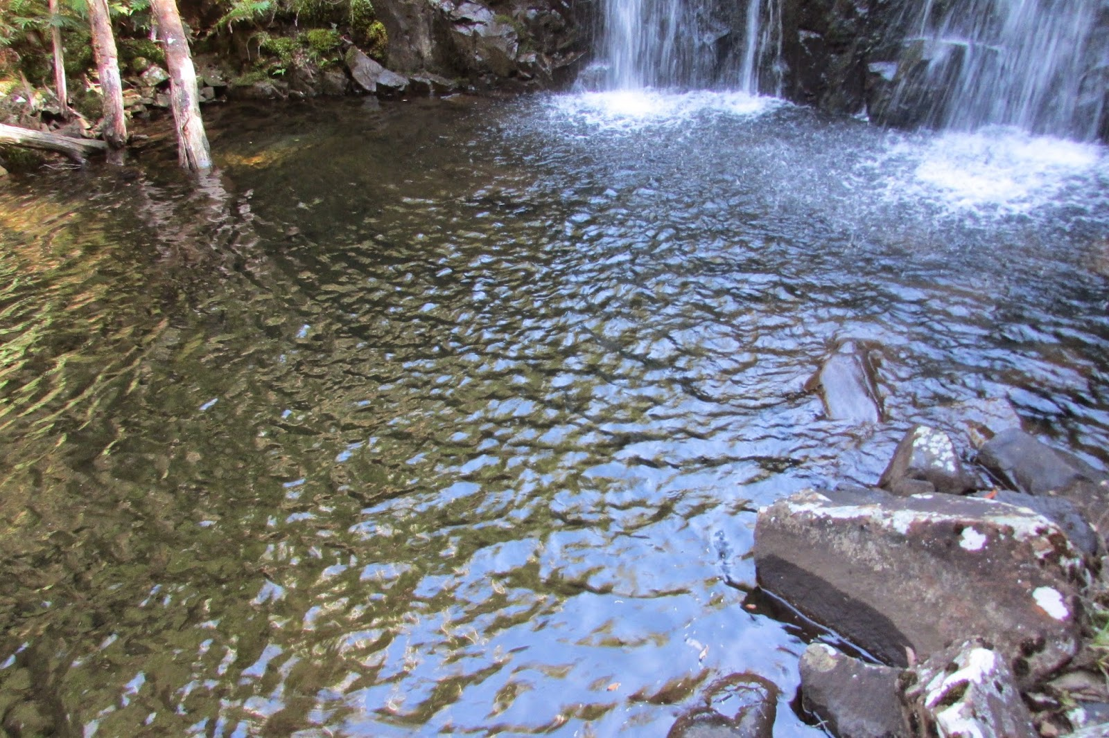 Willies falls hiking south east tasmania - Swimming pools in great falls montana ...