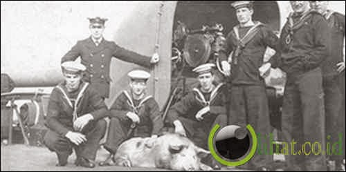 The Pig War: dipicu oleh bidikan dari babi