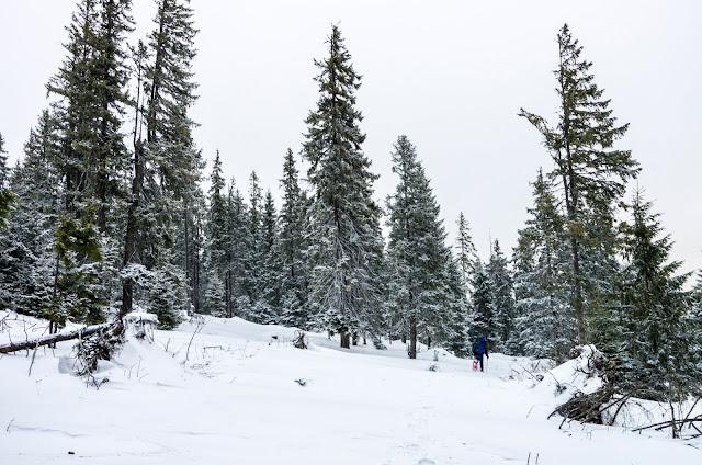 ліс за Мунчеликом