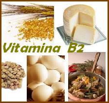 roli  i Vitamines B2, proteinat  indore flavoproteina procesi i frymëmarrjes indore perimet bishtajore produktet shtazore drithërat perime me gjethe përpunimi termik i prodhimeve. faza e rritjes intezive,  zhvillimi,rendesia e vitamines, B2, funksioni i riboflavines, funksioni i vitamines B2