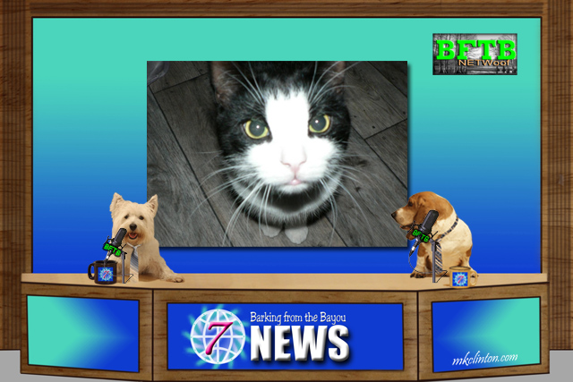 BFTB NETWoof News with black and white cat on background with news hounds at news desk.