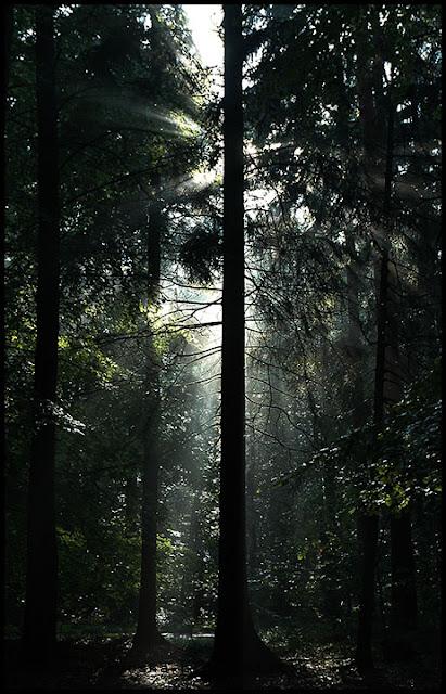Justyna Kurzyńska fotograf fotograf zdjęcia