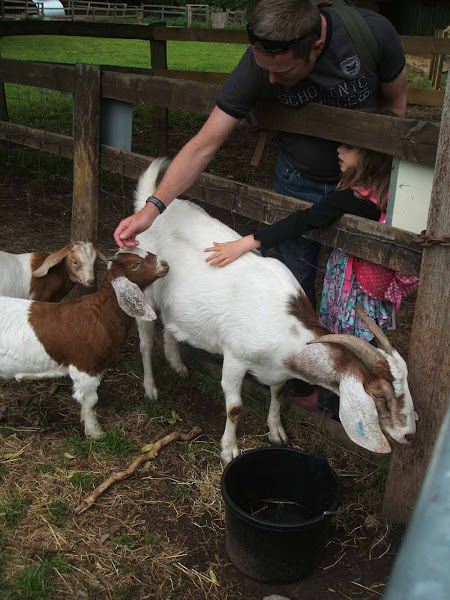 father and daughter make friends with the pygmy goats at windmill hill city farm