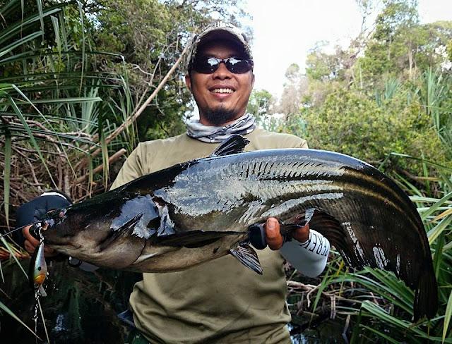 Teknik Memancing Ikan Tapah Dari Ocos