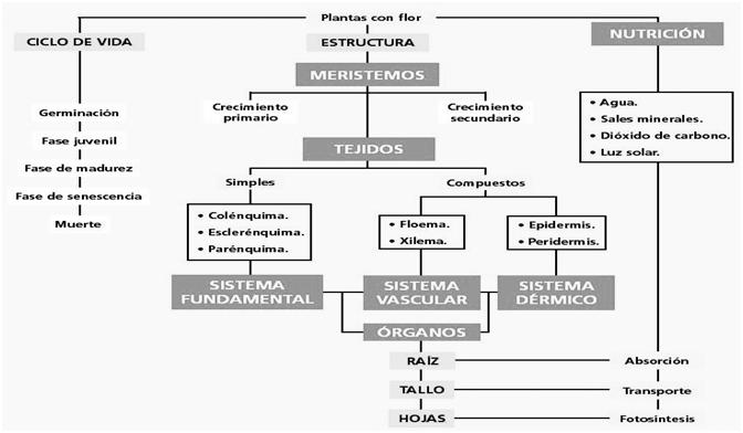 Didactica De Las Ciencias Naturales Ii Unicor Excreción