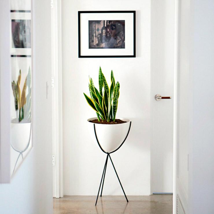 espada-de-são-jorge em vaso modernista