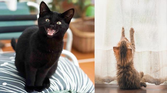 Solving Your Cat have Behavior Problem