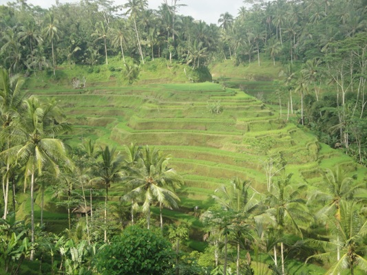 Tegallalang Bali Rice Terrace - Best Bali Holiday Tour Packages