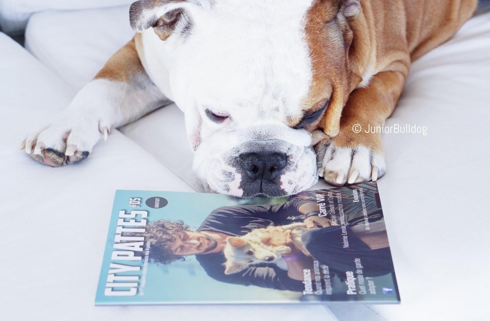 city pattes magazine chien
