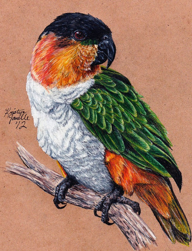 25 Best Bird Drawings For Your Inspiration! - Fine Art and You