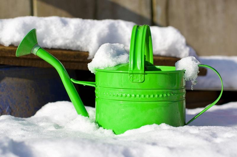 Snow in the Winter Garden