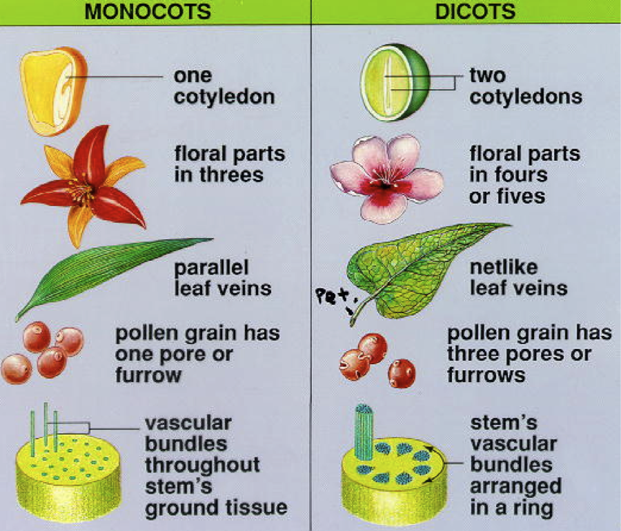 Adventures of the Kotlii: Classical Conversations Cycle 1 ... 10 Examples Of Monocot Plants