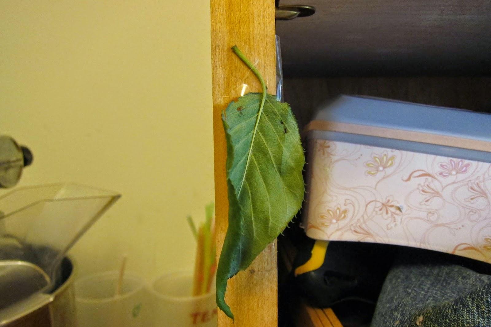 Home Su Cool Mfw Ctg K Week 5 L L Leaf Pyramids