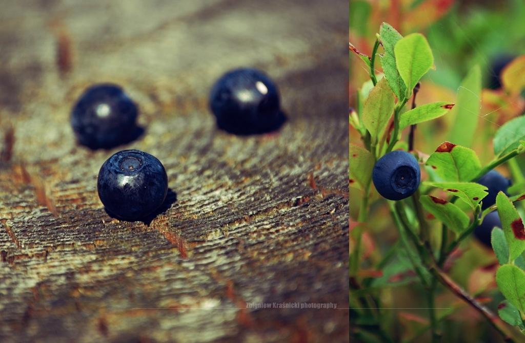 Mazurskie jagody, łąka i sprawy za płotem