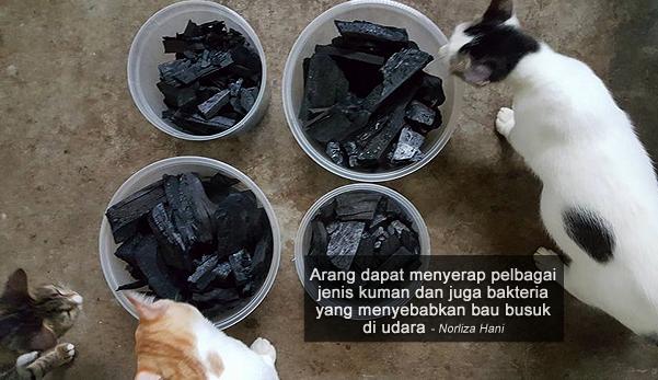 Gunakan Arang Untuk Menghilangkan Bau Najis Kucing The
