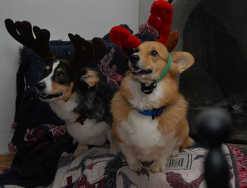 Cute Dog In Christmas Hat Stock Photo - Image: 42283762  |Cute Christmas Dog