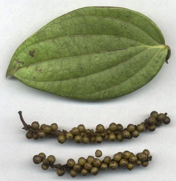 narambu thalarchi sirappu maruththuvar, நரம்புதளர்சி சிறப்பு மருத்துவர்