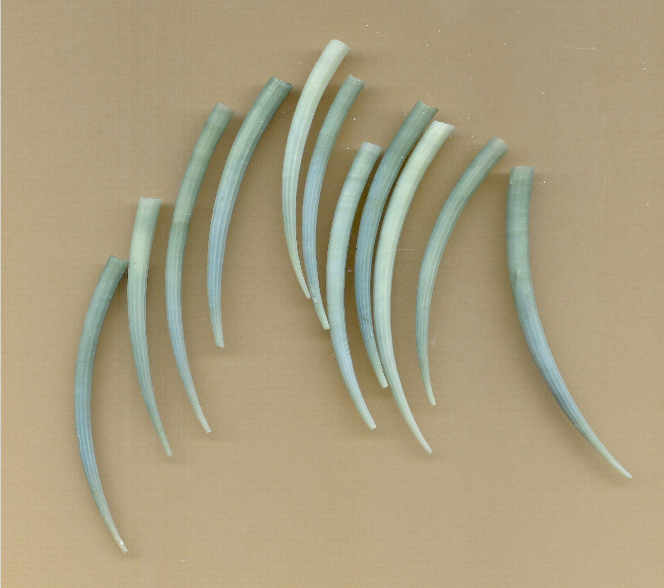Cocopah Beads and Books: California Indian Shell Beads
