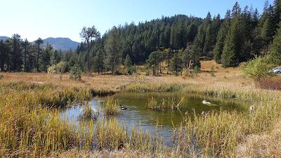 Enten im Teich bei der Passhöhe Glaubenberg