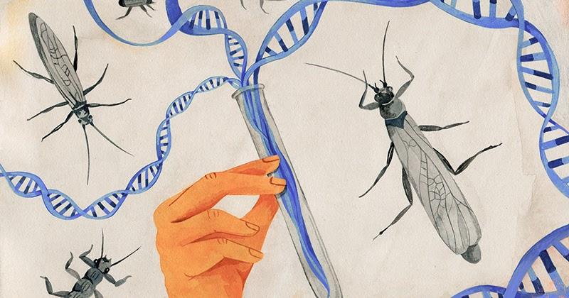 Diversidad%2bgenetica