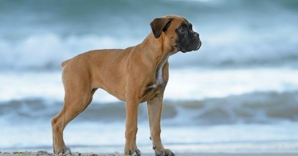 Dog Friendly Hotels Atlantic Beach Nc