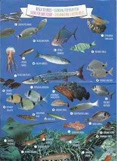 Menorca gyakori halai és vízi élővilága