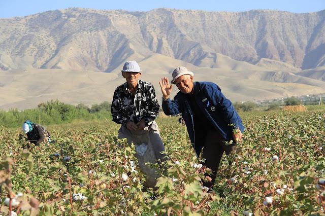 Tadjikistan, Yavan, coton, Pardaboy, © L. Gigout, 2012