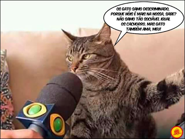 Imagens gato dando entrevista