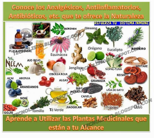 """""""Tipos de plantas medicinales"""""""