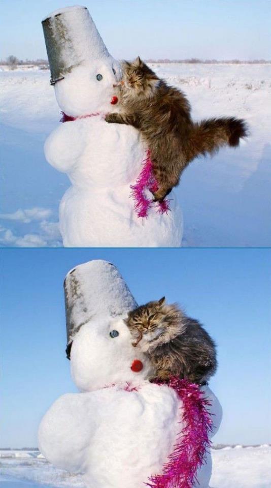 gato jugando mono de nieve