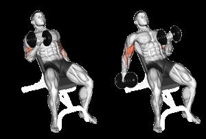 Rosca de bíceps: Tudo o que você precisa saber sobre rosca de bíceps - MUSCULAÇÃO EM FOCO - Tudo Sobre: Treinos, Exercícios, Dietas, Alimentação e o Mundo Fitness