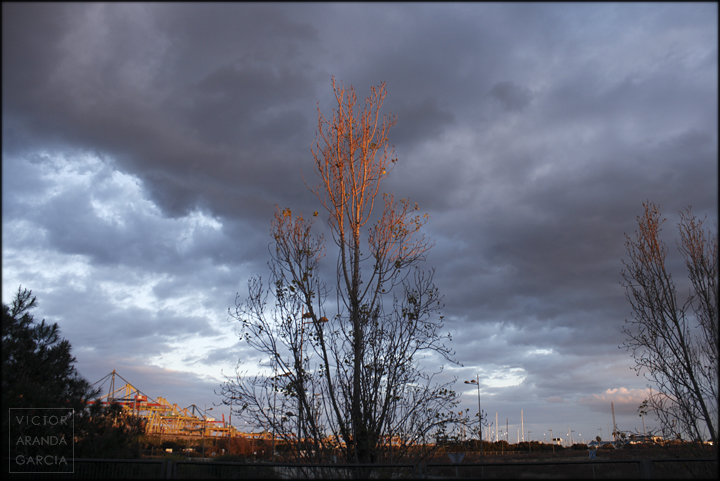 tree,sunset,valencia,landscape