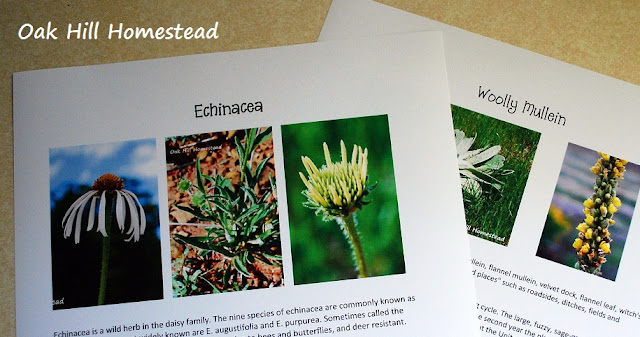 How to make your own field guide of edible and medicinal plants in your area.