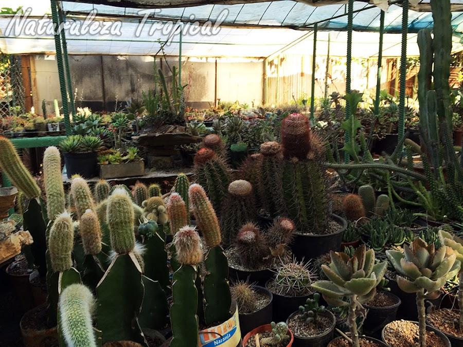 Colección de plantas suculentas