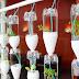 Cara Menanam Sayuran di Botol Aqua dengan Mudah